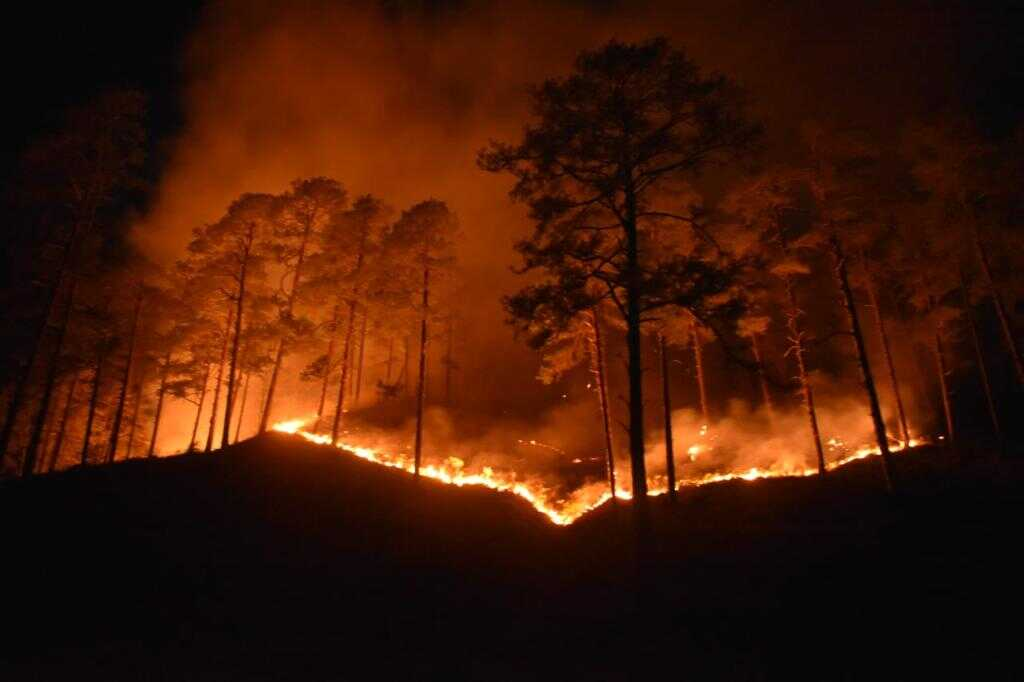 Indian Army douses forest fire in Arunachal's Anjaw
